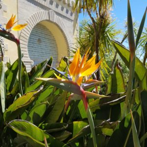 Birds of Paradise at Pena Palace, Sintra Portugal